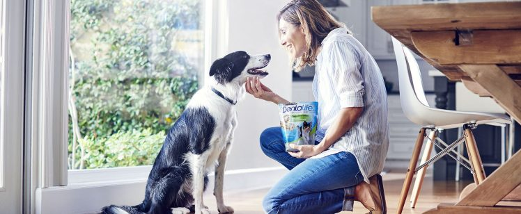 Campaña con influencers para Purina Dentalife